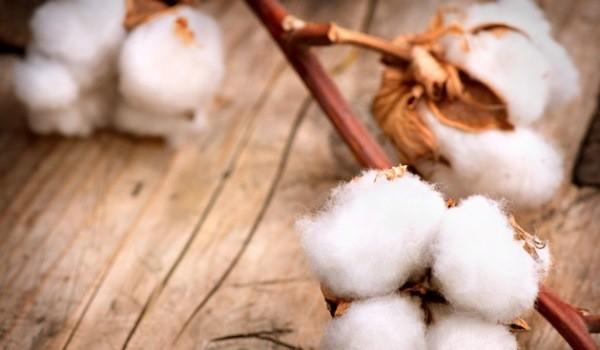 Nachhaltige Baumwolle – Teil 2