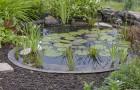 Gartenteich: ein Muss für jeden Garten