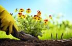 Garten gestalten: die besten Tipps und Tricks für Sie