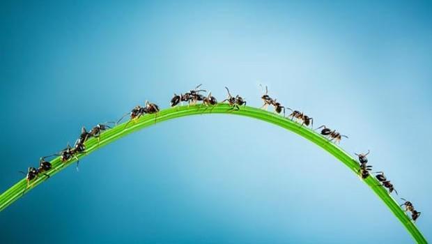 Ameisen – so erwehren Sie sich gegen diese Plagegeister