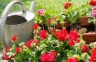 Schädlinge bekämpfen: So schützen Sie Ihre Pflanzen!