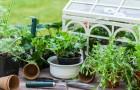 Balkongemüse: optisch & geschmacklich ein Hit