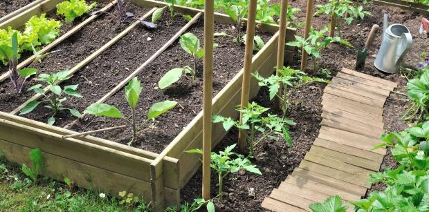 Empfindliche Pflanzen erst nach den Eisheiligen in den Garten setzen